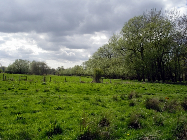 Western end of Bransbury Common