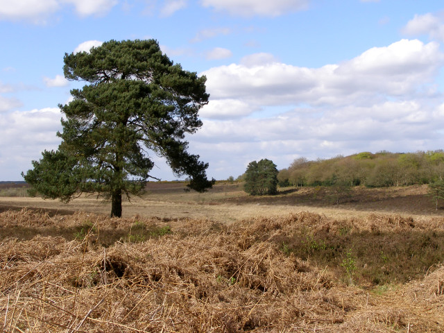 View across the heath towards Ferny Crofts, New Forest