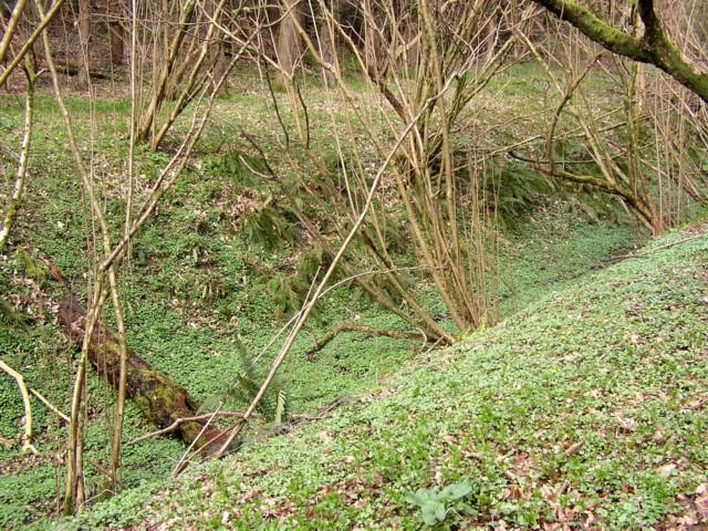 Ferny valley, Hurtmore, Shackleford