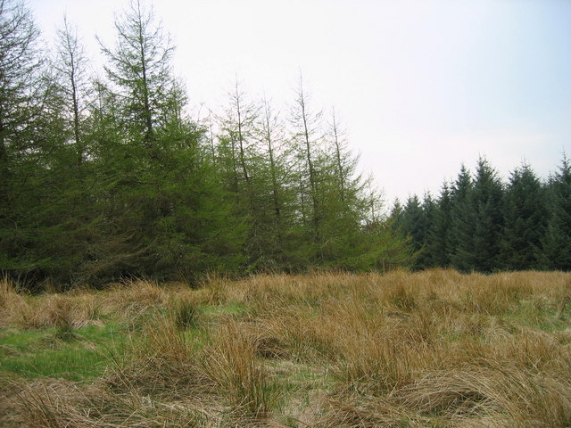 Forest near White Rigg