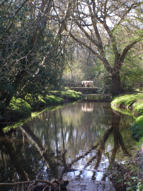 The Beaulieu River south of Ipley Bridge, New Forest