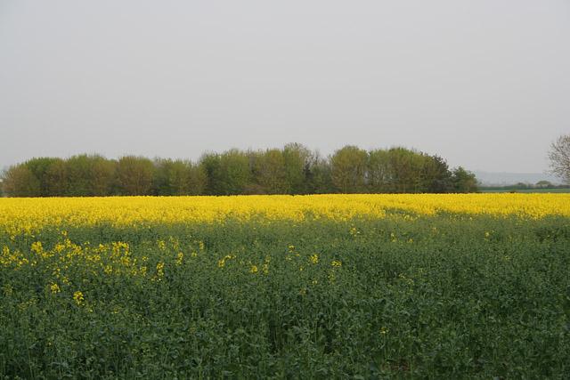 Farmland near Langar, Nottinghamshire