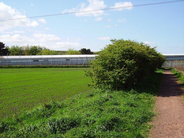 Hedge remnants