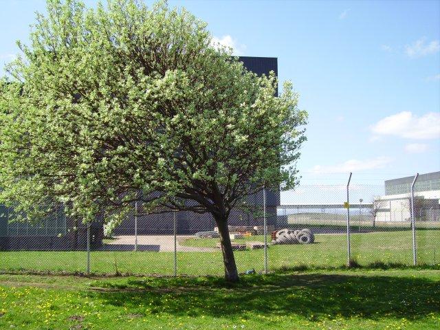 Greenery, Cockenzie Power station