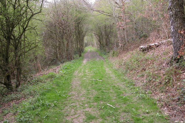 Bridleway through Walcot Wood
