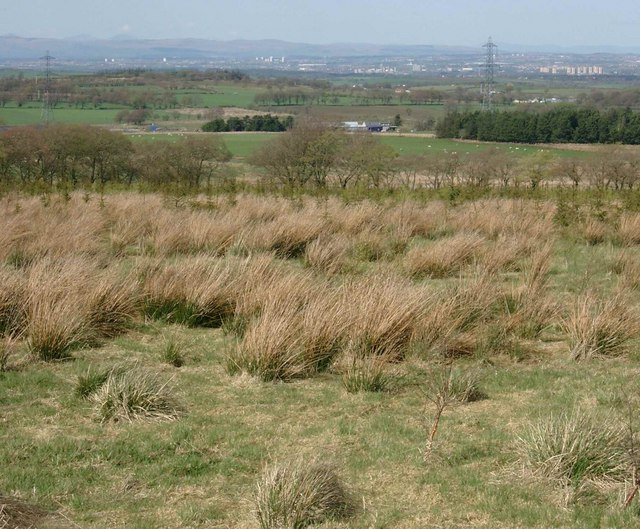 Tree planting in rough moorland