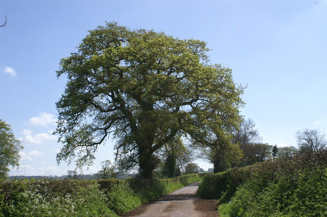 Country Lane on the Mendips