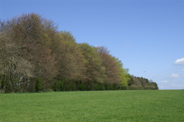 Field & Woods on the Mendips