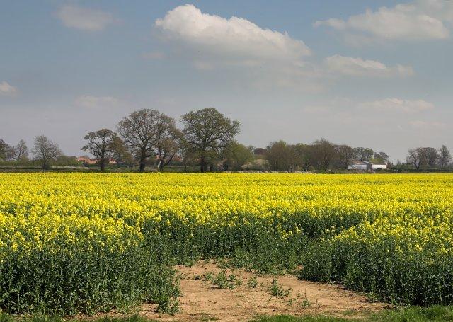 Fields West of Great Habton