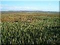 NR3262 : Towards Loch Indaal by Patrick Mackie