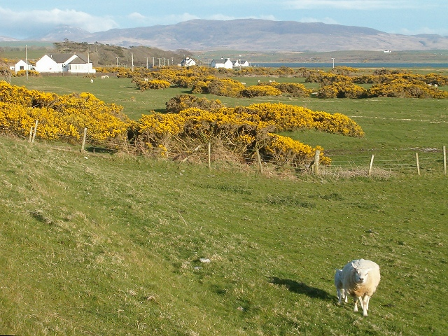 Gorse and grazing