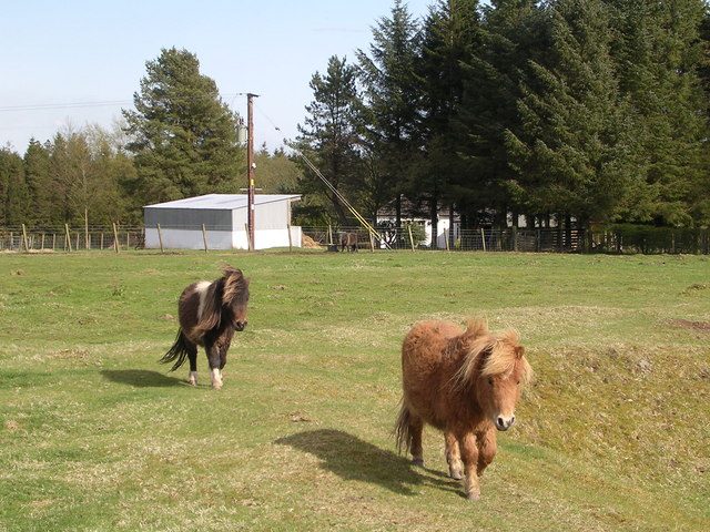 Miniature Ponies at Newlands Farm