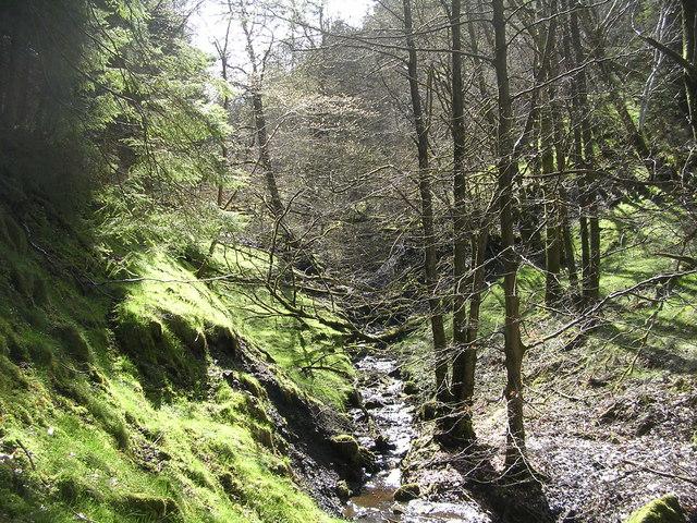 Baldow Glen, near Lennoxtown