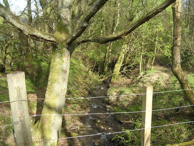 Burn through Finniescroft Wood, near Lennoxtown