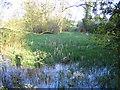 SP6339 : Biddlesden Park by Nigel Cox