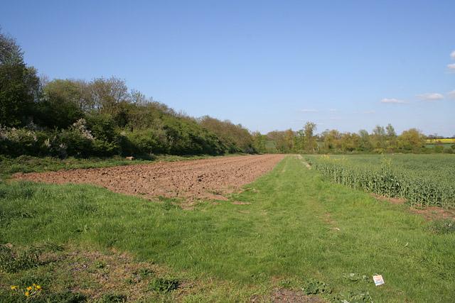 Farmland at Whetstone Gorse