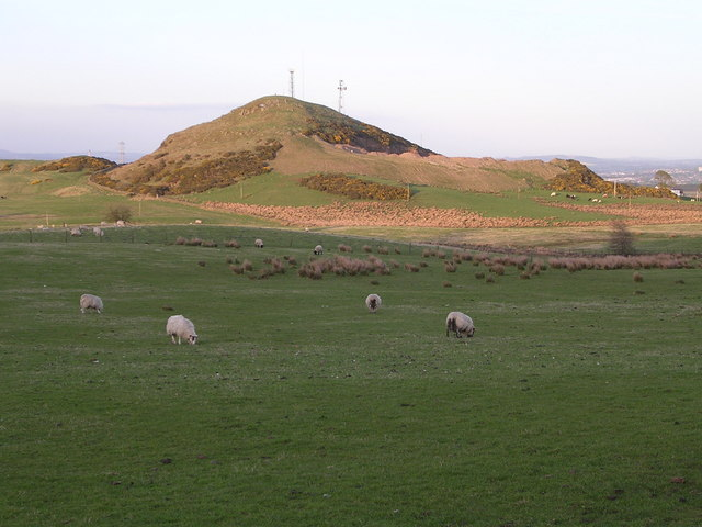 Field of Sheep with Myot Hill behind