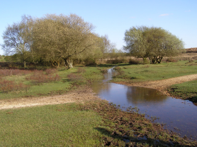 Ford between Buck Hill and Gurnetfields Furzebrake, New Forest