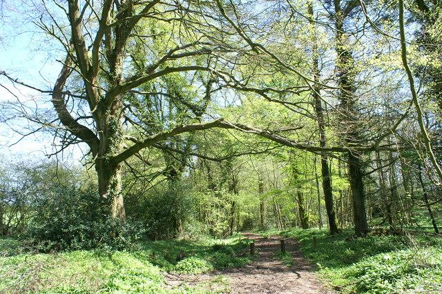 Bridleway Through Woodland