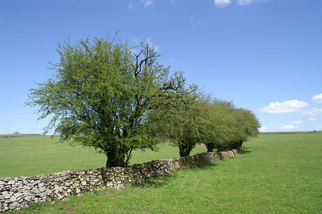 Dry Stone Wall on the Mendips