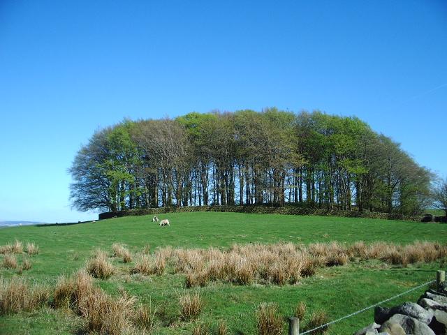 Hunter Hill Plantation