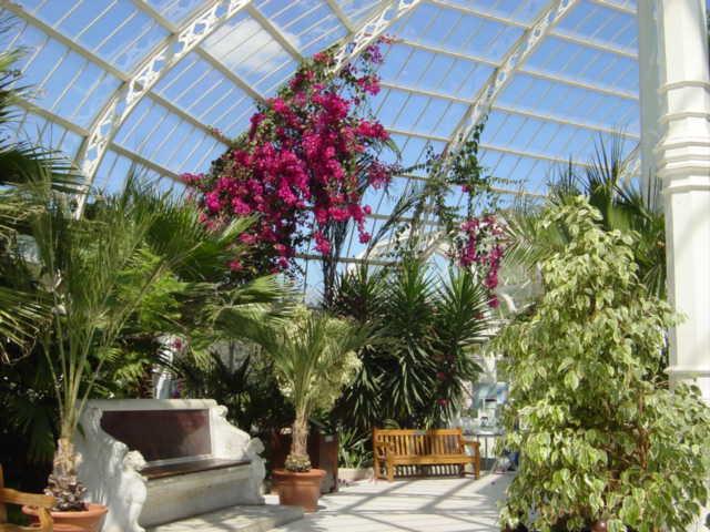 Interior of  Sefton Park Palm House