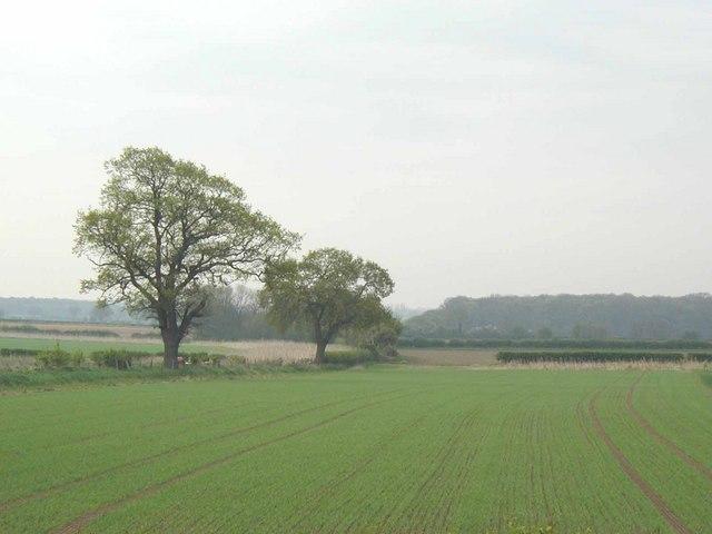 Open farmland in the Vale of York