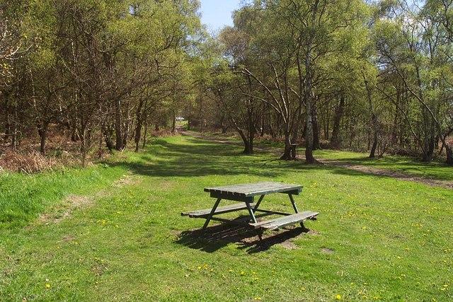 Picnic Area on Edge of Shoal Hill