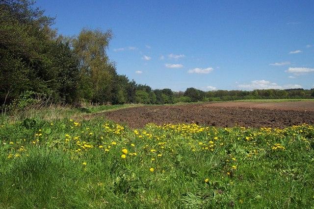 Field off Sheepwash Lane