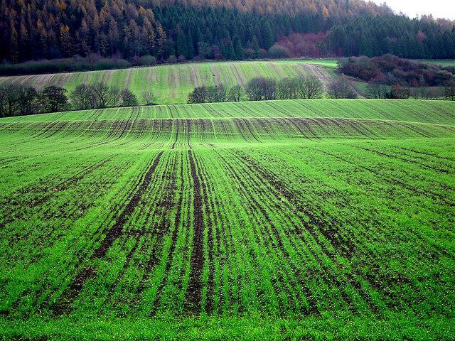 Crop Lines