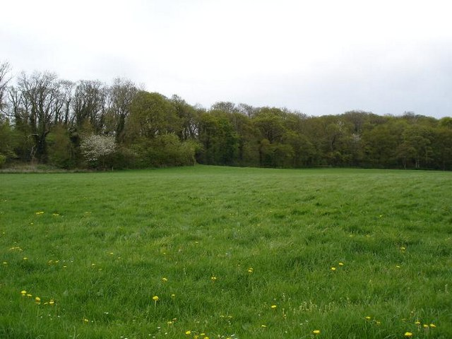 Fields near Prion
