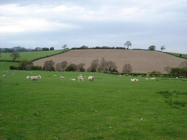 Denbigh fields