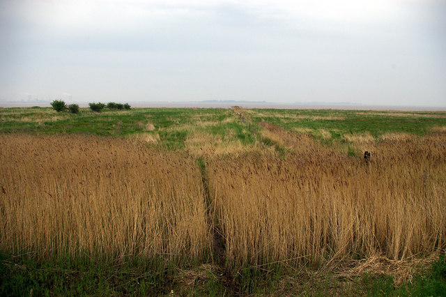 Humber Marshes