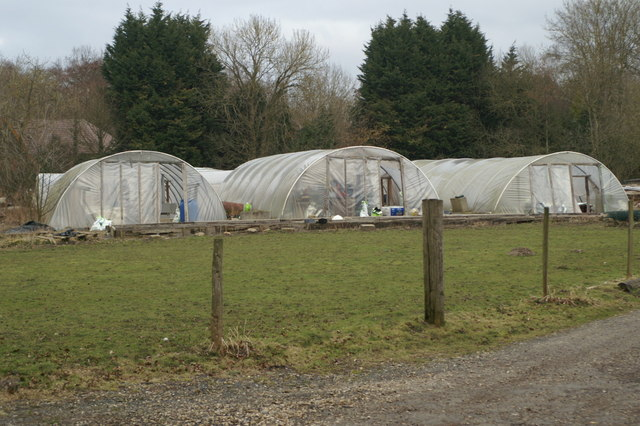 Polytunnels, Green Acres