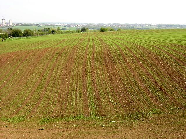 New Crop Growth