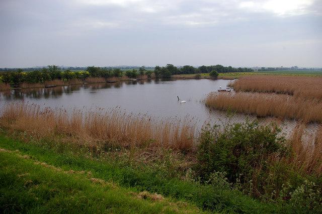 Humber Marshland