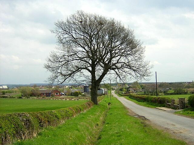 Tree Beside Broomfield Road