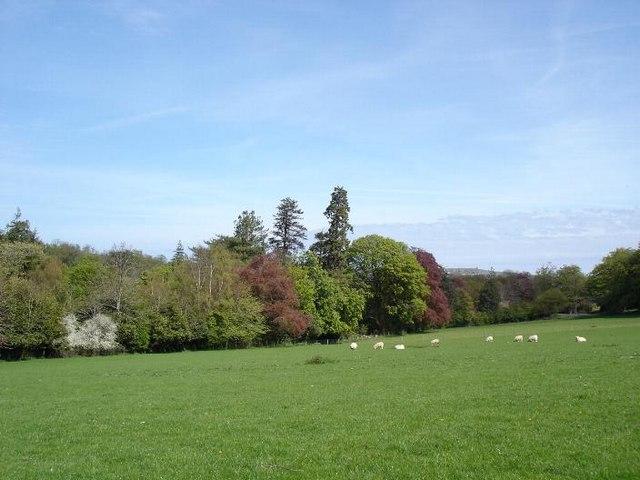 Dolwen fields