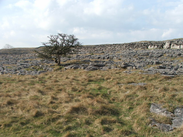 Tree and Limestone.