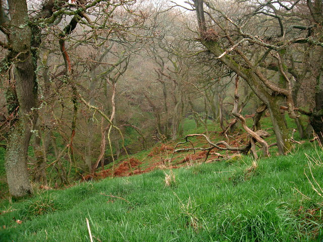 Wooded valley, near Halls