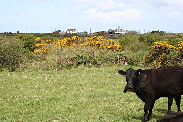 Farmland on Buller Downs