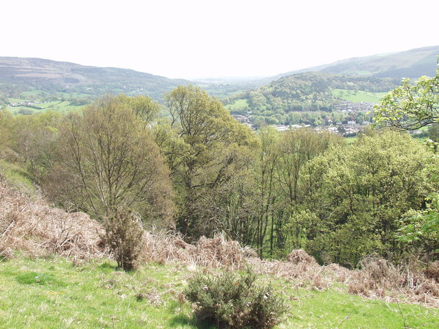 Native  woodland on the south slope of Geraint Hill