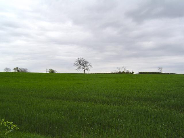 South Devon scene