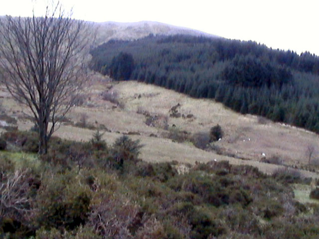 Woods above Afon Hafod-llian