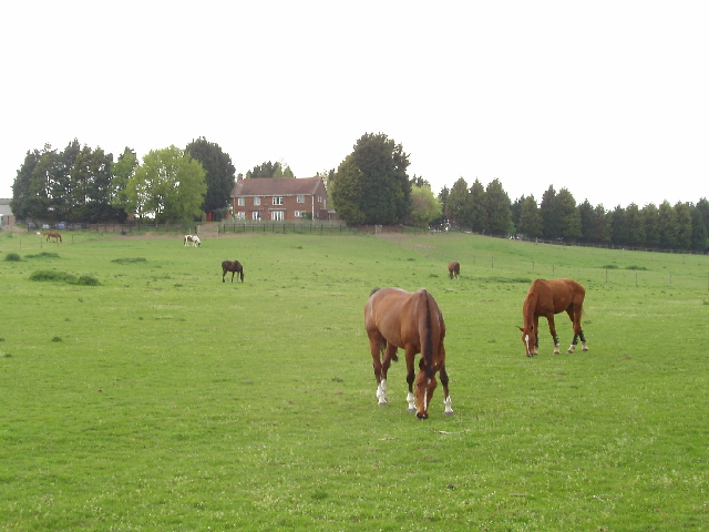 Horses grazing at Trumps Farm