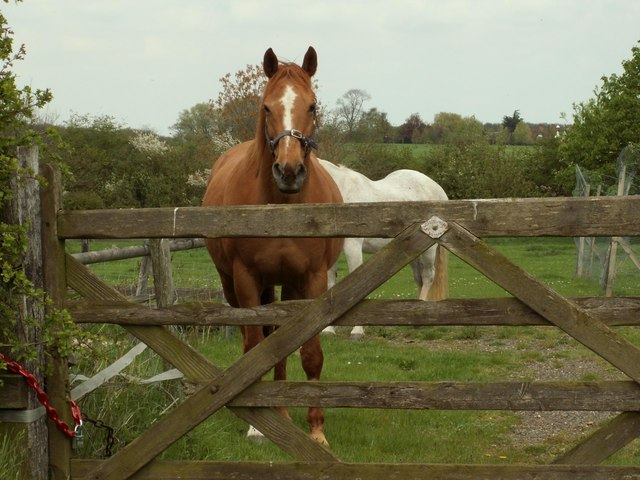 Horses near Tinkers Green, Essex