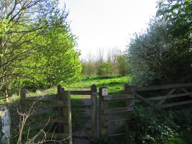 The Seek, a Woodland Trust wood