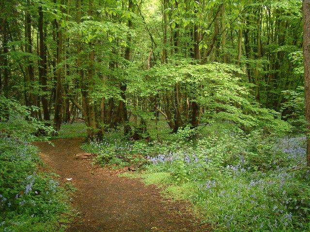 Monk's Wood, Stevenage