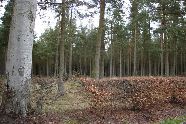 Wooded area near Hillockhead