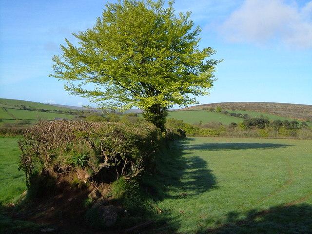Near Moor Cross